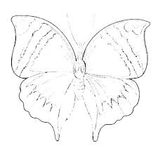Printable Butterfly Outline Small Butterfly Template Monarch Printable And Menu Cake