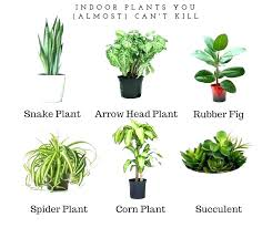 Great office plants Small Great Office Plants Decoration Low Light Cool For 940788 Peyvsoftinfo Great Office Plants Decoration Low Light Cool For 940788