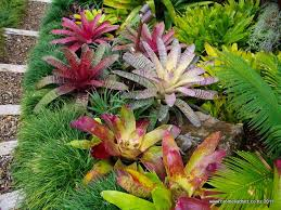 Small Picture 11 best Bromeliad Garden images on Pinterest Garden ideas