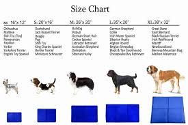 63 True Australian Shepherd Size Chart