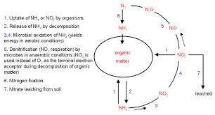 Nitrogen Fixation
