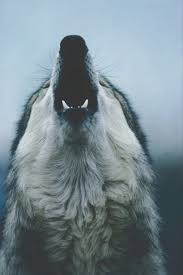 wolf wallpaper iphone tumblr. Plain Wolf Wolf Animal And Wild Image To Wolf Wallpaper Iphone Tumblr A