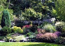 garden planting flowers shrubs and