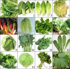 Leaf Vegetables The Worldwide Vegetables