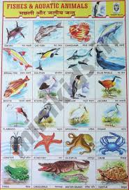 Fishes Aquatic Animals Chart Number 31 Minikids In