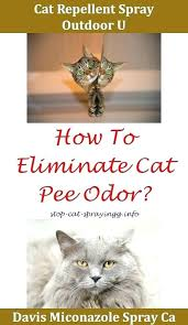 how to keep cats away spray to keep cats away from furniture spray to keep cats