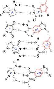 Chapter 2 Water Non Covalent Bonds Hydrogen Bonds