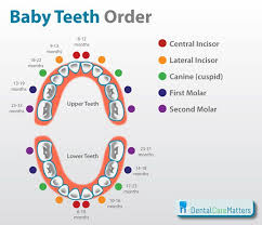 The Order That Baby Teeth Erupt A Handy Chart For Parents