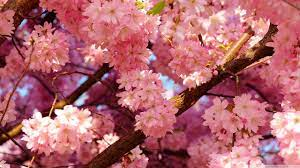 Flower Aesthetic PC Wallpapers on ...