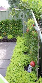 Kitchen Garden International 736 Best Images About Kitchen Garden On Pinterest Raised Beds