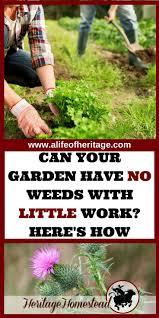 Kitchen Garden In India Small Home Kitchen Garden Ideas Youtube Kitchen Gardening For