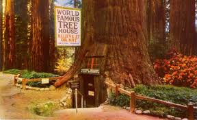 the world famous tree house