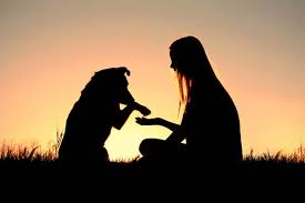 Image result for dogs are love
