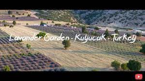 Lavander Garden - Kuyucak - Turkey - YouTube