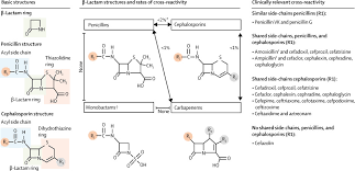 Antibiotic Allergy Sciencedirect