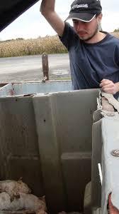 checking bin cetfa investigator checking bin for surviving pacd piglet flickr