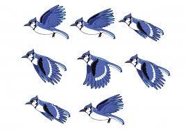 flying birds animation. Interesting Birds Blue Jay Flying Bird Animation Sprite Premium Vector With Birds D
