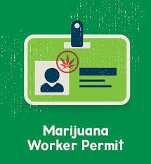 worker permit icon