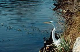 Salaries For Wildlife Ecologists Chron Com