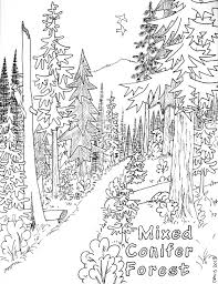 Small Picture Coniferous Forest Coloring Page Coloring Page For Kids Kids Coloring