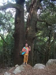 Risultati immagini per bioregionalismo alberi