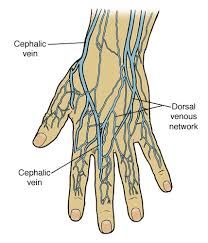 Vein Chart For Shooting Up Vein Care