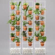 outdoor indoor plant