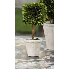 Home Decor Accessories Outdoor Topiary Zodax Preserved Boxwood Topiary in  Pot