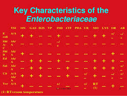 Enterobacteriaceae Biochemical Reactions Chart Biochemical Tests In Enterobacteriaceae