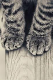 cat wallpaper iphone 6. Fine Iphone Striped Kitten Legs Wooden Floor IPhone 6 Plus HD Wallpaper To Cat Iphone A