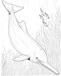 Dolphin clipart baiji 15