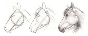horse head drawing step by step. How To Draw Horse Head Intended Drawing Step By