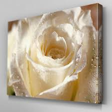 white rose canvas wall art