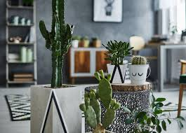 indoor gardening. Three Indoor Gardening Ideas
