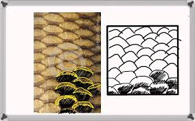how to draw fish textures 1 of 6 fish scales