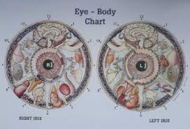 Bernard Jensen Iridology Chart Pdf Iridology Resources Light Embody