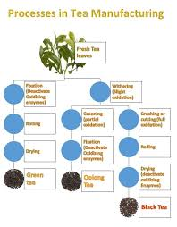 Know The Steps Involved In Tea Production
