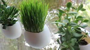 indoor window garden. tiny gardens that attach to your window! indoor window garden