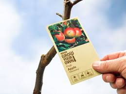 PEAR TREE  Cerca Con Google  My Flowers  Pinterest  Pear Trees Full Size Fruit Trees For Sale