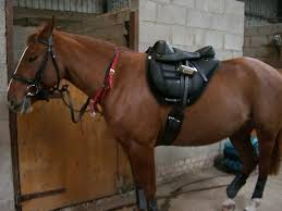 torsion treeless saddle. out on our hack today, not the best picture of us, was taken without knowing it, altho tara has that look in her eye as if to say, torsion treeless saddle
