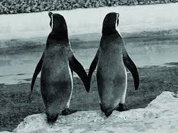 two penguins holding hands. Beautiful Holding Download Printable Version Inside Two Penguins Holding Hands W