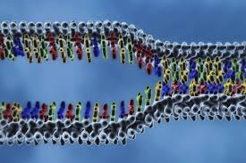 Dna Replication Steps And Process