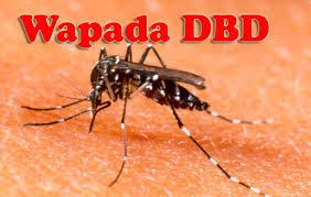 Hasil gambar untuk nyamuk dbd demam berdarah dengue