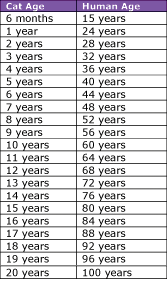 Cat In Human Years Conversion Chart Cat Years Cat Ages