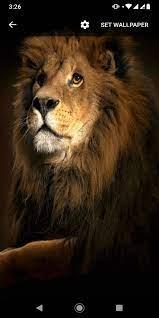 Golden Lion GIF Live Wallpaper for ...