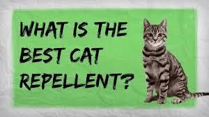 how to make a homemade cat repellent