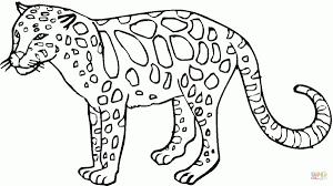 Idea 20 Disegni Da Colorare Animali Leopardo Aestelzer Photography