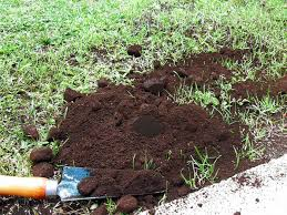 9 great way to use coffee grounds how to use coffee ground in the garden
