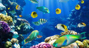 Best 29+ Fish Backgrounds for Computer ...