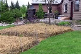 sheet mulching in my organic garden